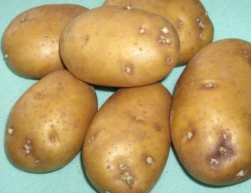 Как отобрать на семена картофель. Секреты семенного картофеля