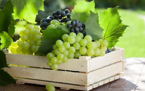 Очень сладкий виноград сорта. Самые вкусные сорта винограда