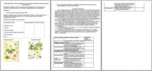 Изучение морфологического критерия вида. Лабораторная работа по биологии «Изучение морфологических особенностей вида. Изучение многообразия критериев вида»