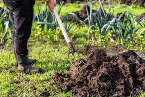 Когда нужно вносить в почву навоз. Можно ли вносить навоз в почву