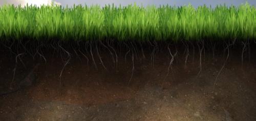 Почва суглинок, что это. Типы почв и их особенности