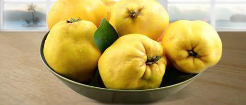 Когда созревает японская айва. Айва японская, как использовать плоды хеномелеса, свойства, выращивание, рецепты