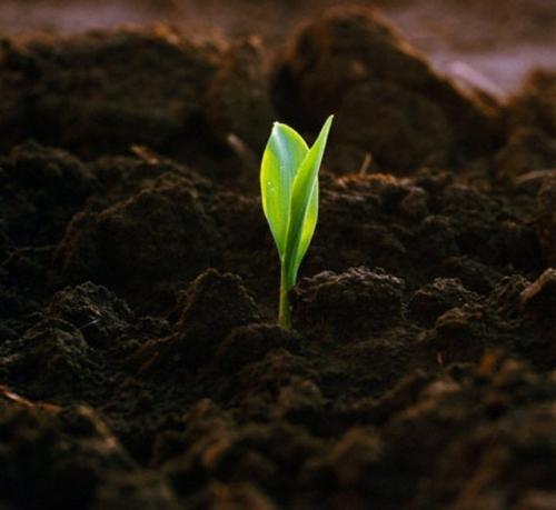 Как вносить перегной в почву весной. Как вносить перегной