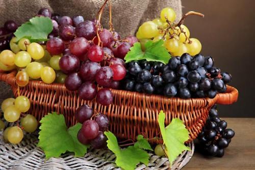 Описание сортов винограда. Лучшие сорта винограда: фото, названия и описания (каталог)